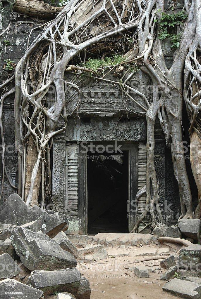 Overgrown Khmer Ruins royalty-free stock photo