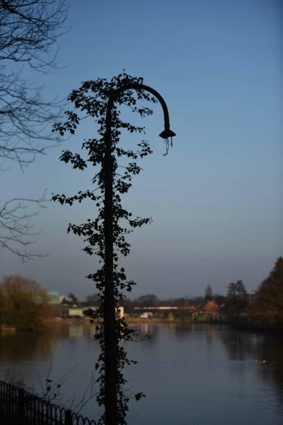 Overgrown lamp stock photo