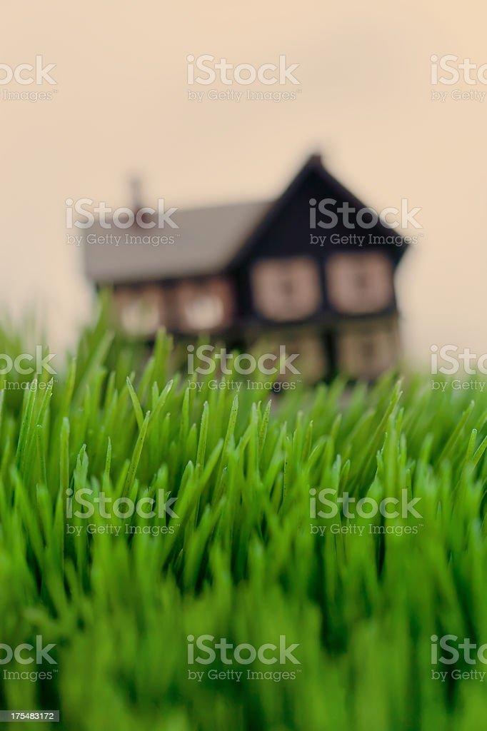 Overgrown stock photo