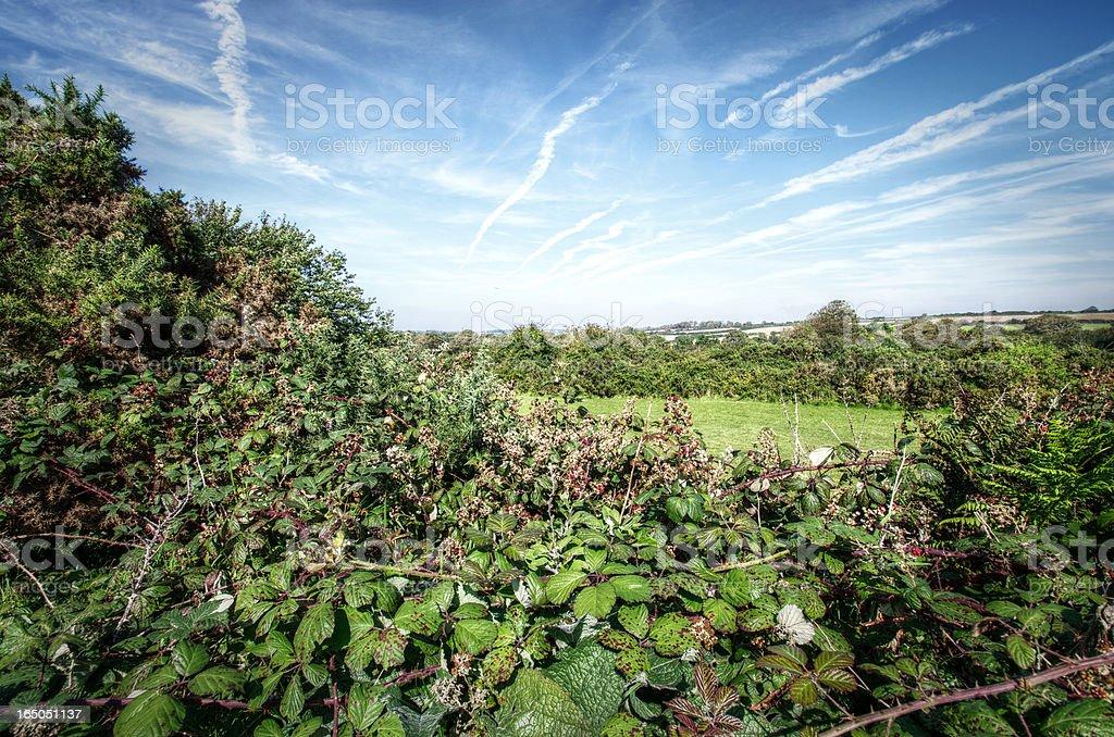 Overgrown September Hedge Cornwall UK royalty-free stock photo