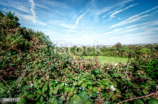 istock Overgrown September Hedge Cornwall UK 165051137