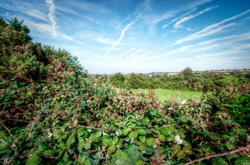 istock Overgrown September Hedge Cornwall UK 165051137