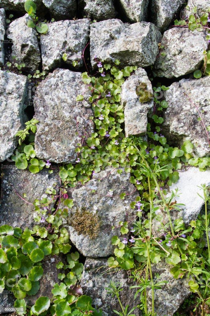 Overgrown Stone Wall stock photo