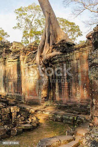 Overgrown Temple Ruin Angkor Wat Cambodia Tree On Temple Wall Stock Photo & More Pictures of Ancient