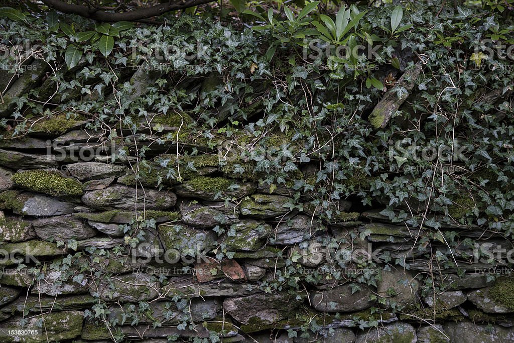 Overgrown wall stock photo
