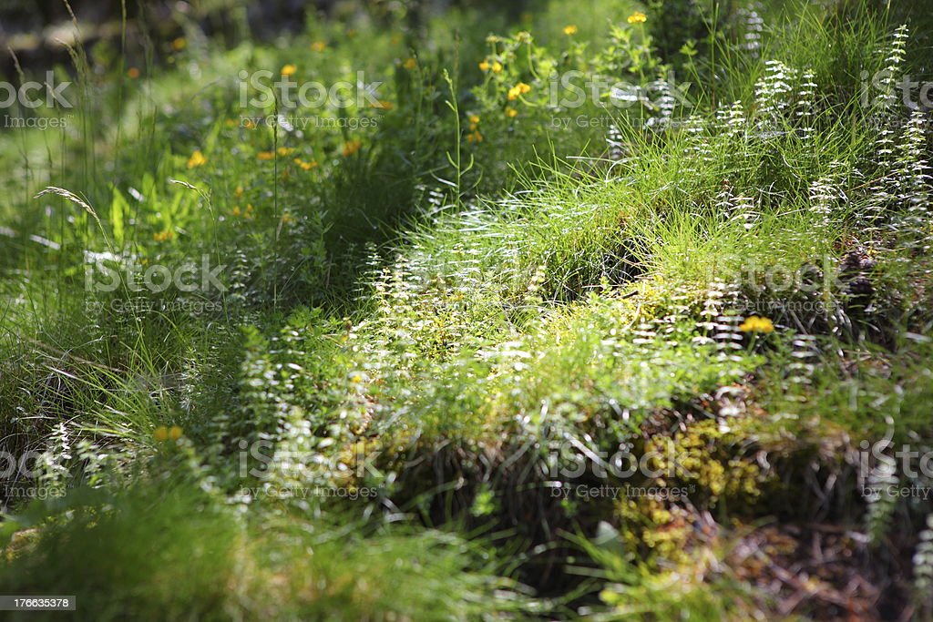 overgrowth in the forest of Pyrenees royalty-free stock photo
