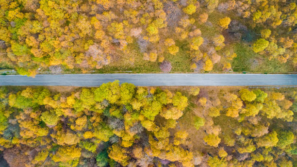overhead aerial top view over straight road in colorful countryside autumn forest.fall orange,green,yellow,red tree woods.mountain rectilinear street path background.straight-down above perspective - straight stock photos and pictures