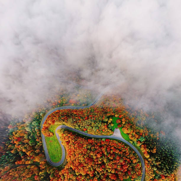 Overhead aerial view of autumn forest road in morning fog. Mosele Valley, Germany. stock photo