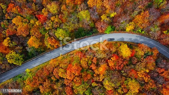 Autumn forest road in morning