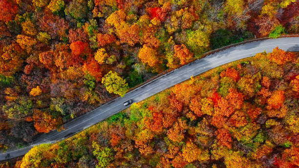 Overhead aerial view of winding mountain road inside colorful autumn forest stock photo