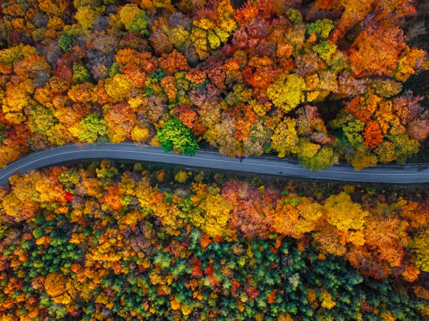 Overhead aerial view of winding mountain road inside colorful mixed autumn forest stock photo