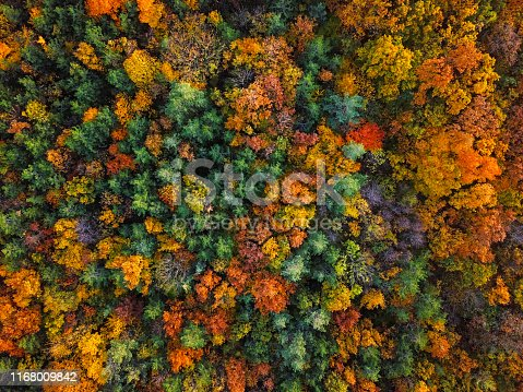 Flight over autumn forest.