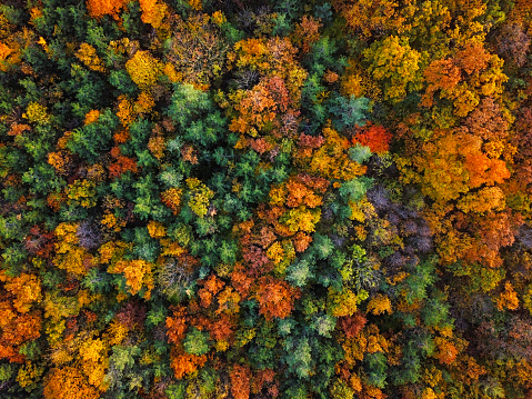 Overhead colorful mixed autumn forest aerial background, made directly from above