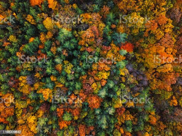 Photo of Overhead colorful mixed autumn forest aerial background, made directly from above