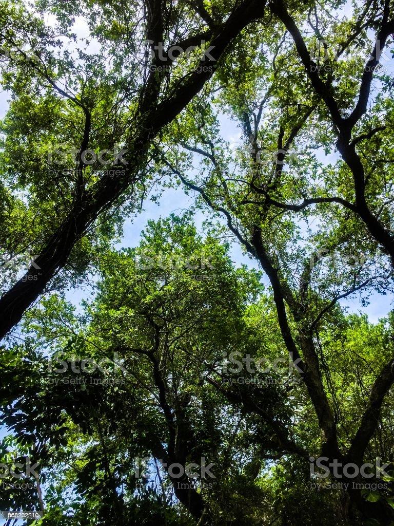 Overhead Treescape stock photo
