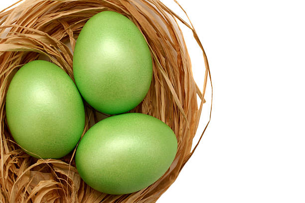 Overhead view of a nest with three green eggs stock photo