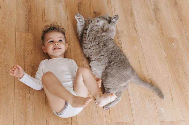 Overhead view of adorable toddler boy and grey british shorthair cat picture id1007422434?b=1&k=6&m=1007422434&s=612x612&w=0&h=c0u0cnubfps5sp8vdiztglmjjljldvqavbrvpi0oq9o=
