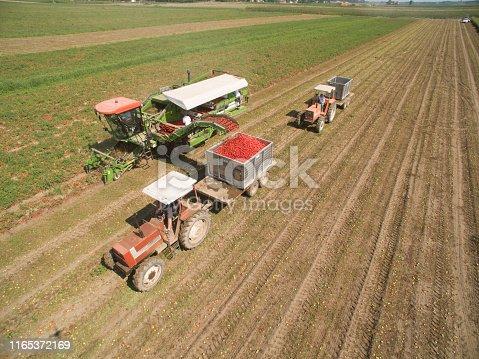 Drone shots of a tomato farm, Piedmont