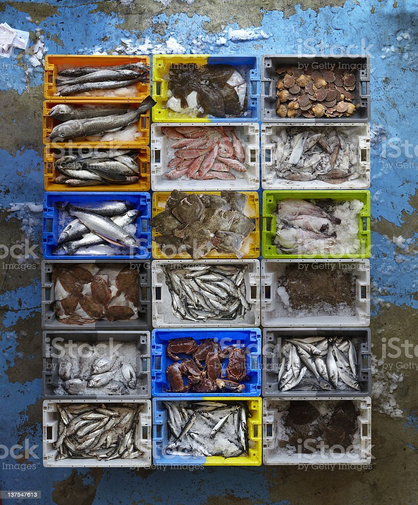 Overhead view of creates of seafood stock photo