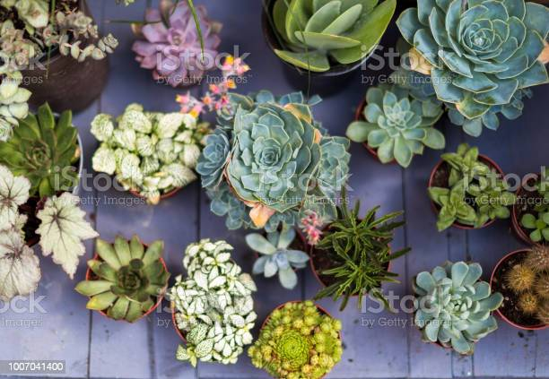 Photo of Overhead view of exotic cactus plants in a row
