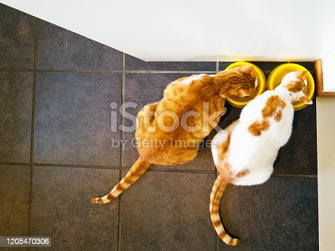 Two cats, one ginger one ginger and white, eat happily from their bowls on a tiled kitchen floor.