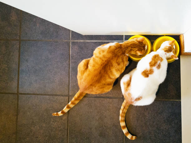 Overhead view of two contented cats eating stock photo