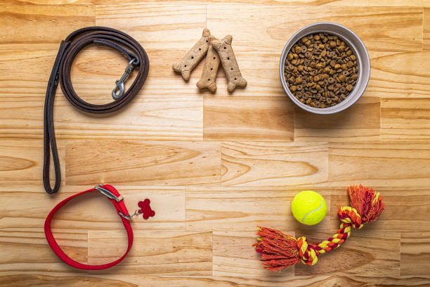 Overhead view of various dog accessories on wooden block table