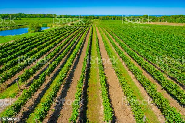 Photo of Overhead View of Vineyard with Lake Ontario in Background