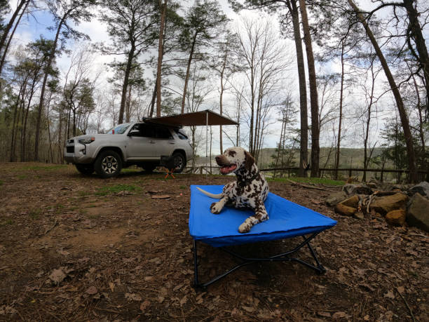 Overlanding campsite with resting Dalmatian on cot stock photo