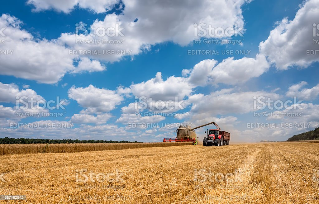 Overloading grain harvester into the red tank of the tractor trailer. stock photo