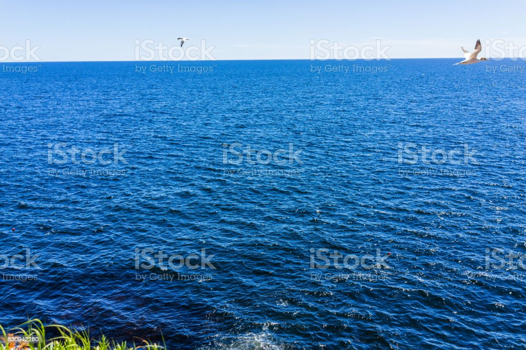 Overlook of ocean on trail in Bonaventure Island, Quebec, Canada by Perce in Gaspesie, Gaspea area with gannet birds flying stock photo