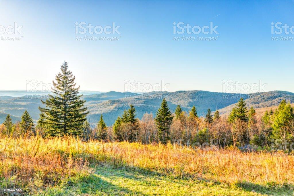 Esquecer das montanhas da Virgínia Ocidental no Outono Outono com folhagem e um pinheiro no sol de manhã ao nascer do sol - foto de acervo