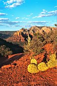 Overlook Point in Sedona Arizona USA at Sunset.  With prickly pear cacti and blooming yucca plant.  Looking to the Crimson Cliffs and Munds Mountain.  Passing high clouds after storm leaves the area.  Crystal clear evening.