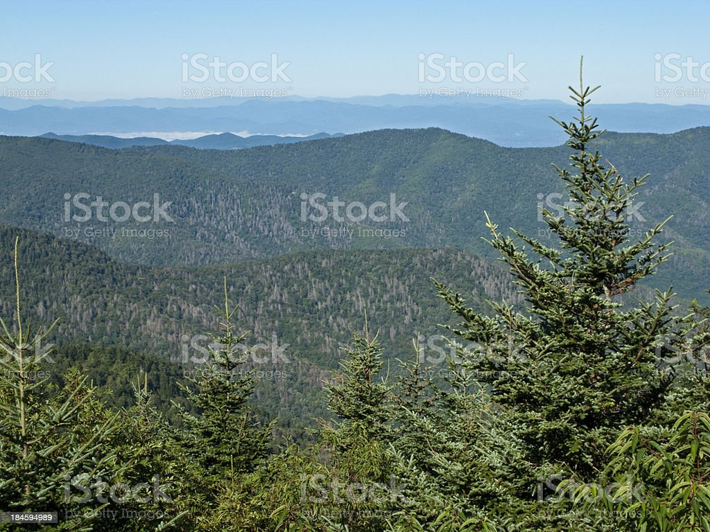 Overlooking Valley And Balsam Pine Trees At Mt. Mitchell,  NC stock photo