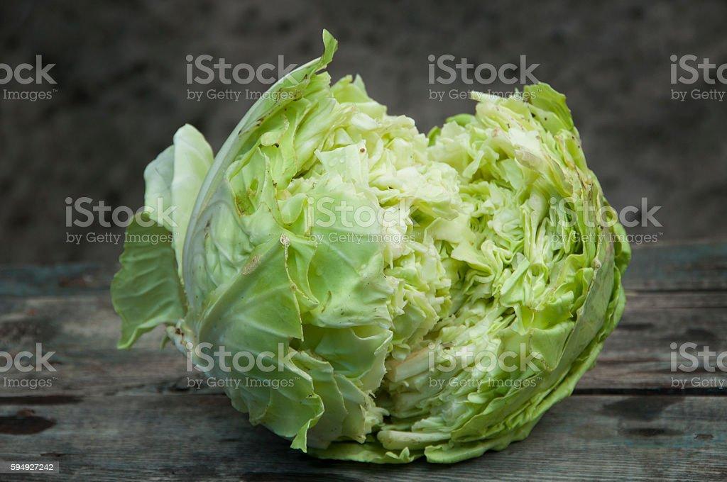 overripe cracked cabbage head stock photo