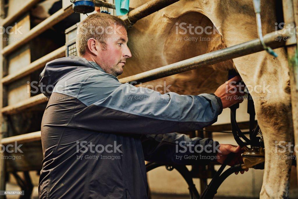 Overseeing the milking process stock photo