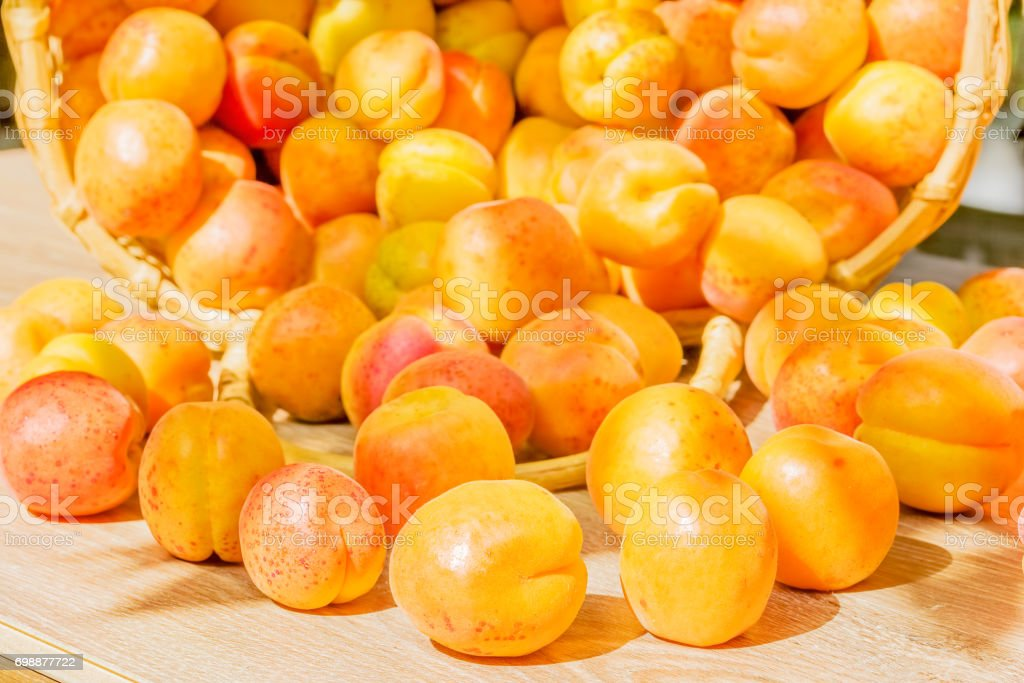 Overturned basket of ripe apricots, close up stock photo