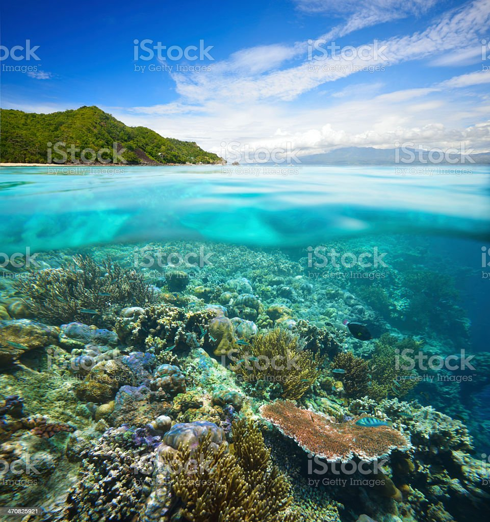 Over-under view of beautiful coastline and scenic coral reef stock photo