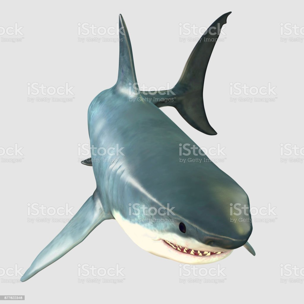 Overview Great White Shark stock photo