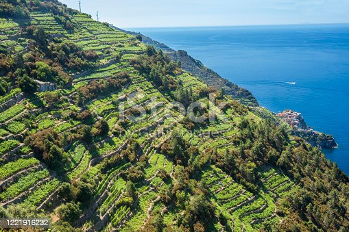 Terraced vineyards above Manarola village, Cinque Terre, Italian Riveria, Liguria, italy, Europe