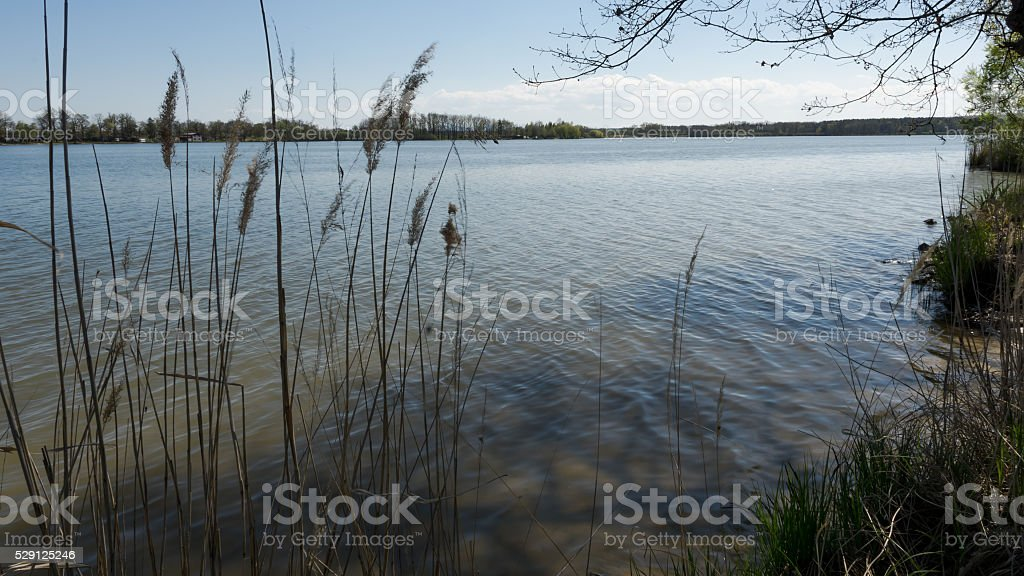 Overview of the pond from behind the reeds stock photo