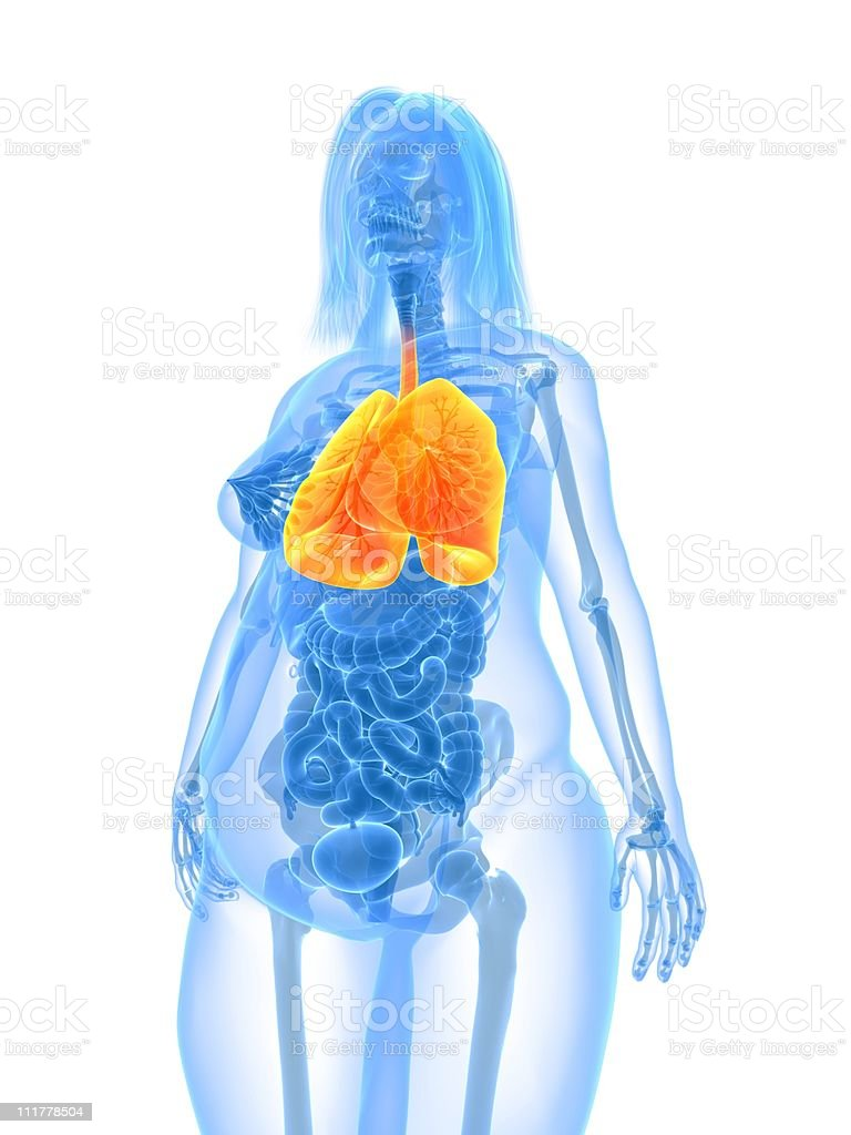 overweight female - lung royalty-free stock photo