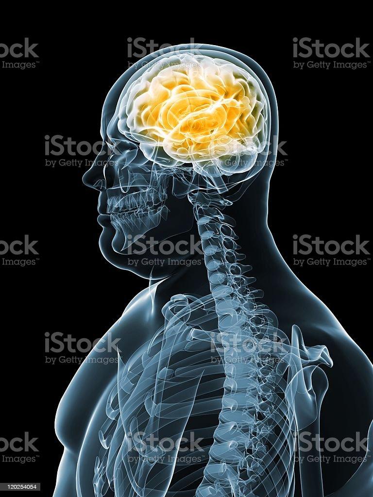 overweight male - brain stock photo