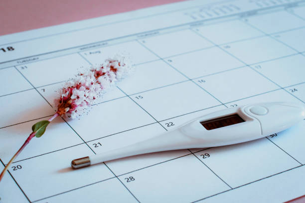 Ovulation Calendar with Flower and thermometer stock photo