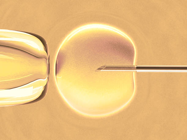 Ovum Warm Color (in vitro fertilization) stock photo