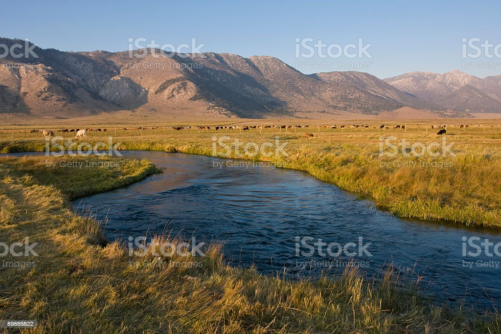Owens River royalty-free stock photo