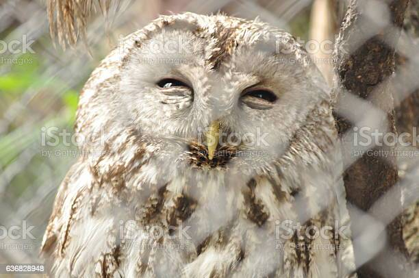 Owl behind bars in zoo picture id636828948?b=1&k=6&m=636828948&s=612x612&h=1t9shyqngg9gqnvmriruzib4dqa3lznh1borvfw2y3g=