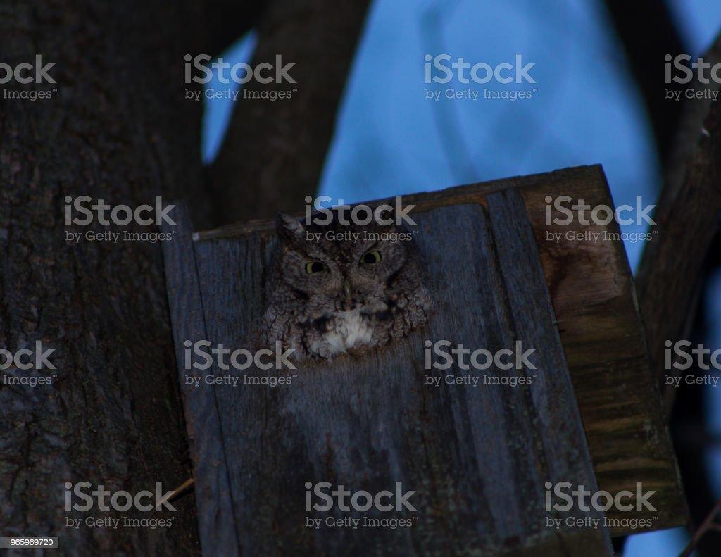 Eule in einem Vogelhäuschen - Lizenzfrei Eule Stock-Foto