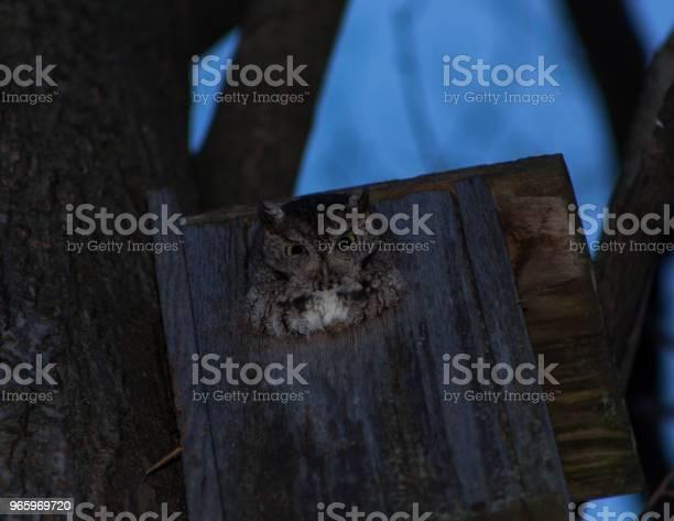 Eule In Einem Vogelhäuschen Stockfoto und mehr Bilder von Eule