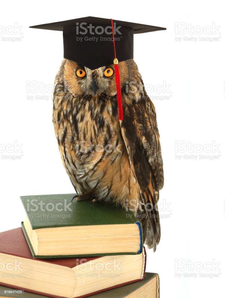 owl in academic cap royalty-free stock photo
